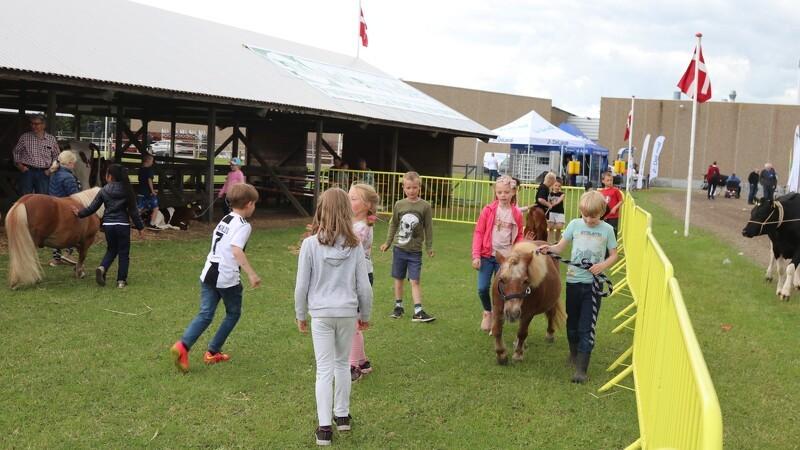 Børn lærer om gårdens dyr på dyrskue