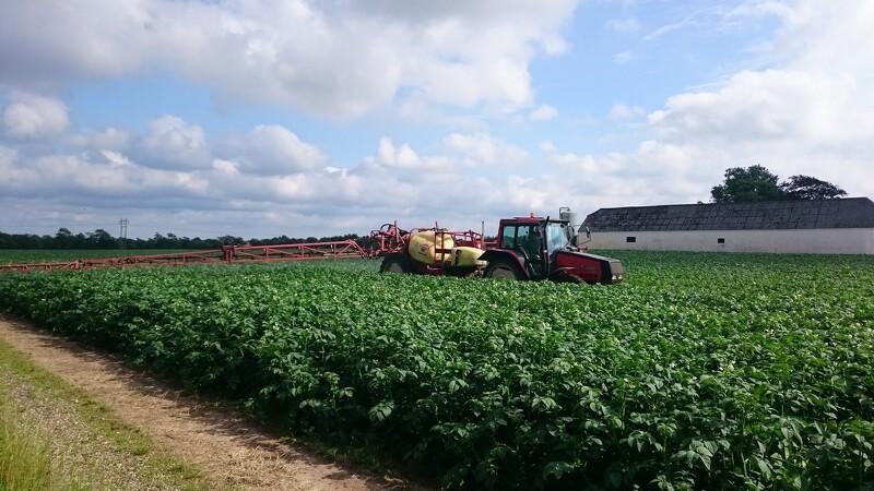 Stivelseskartofler hitter hos flere landmænd