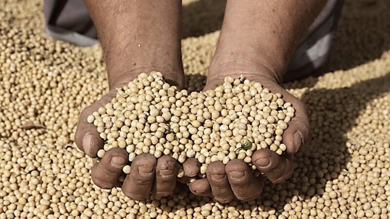 Jyske Markets: Mindsket vejrpræmier trækker majs og soja lavere