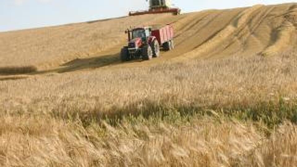 landbrugsproduktion