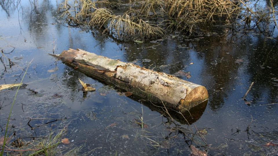 forurening af søer