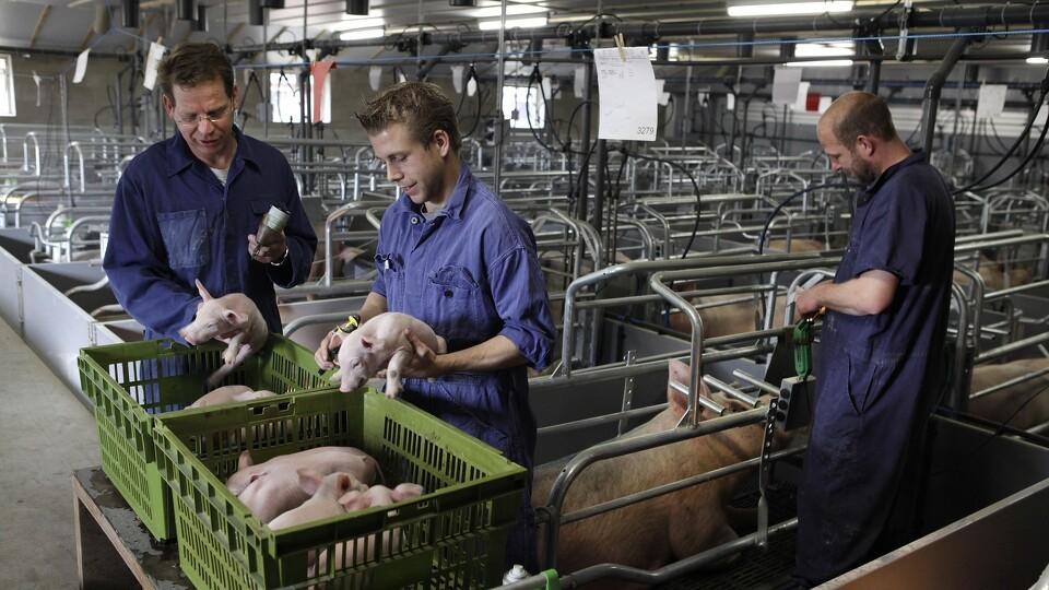 ansatte i landbruget