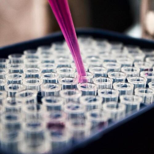 Proteinopdagelse kan føre til miljøvenlige fungicider