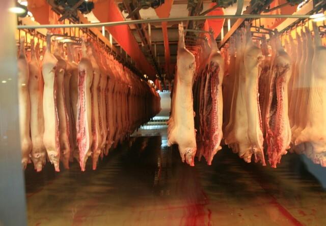 Tysk slagteri ramt af covid-19: Tysk udbudspukkel vokser