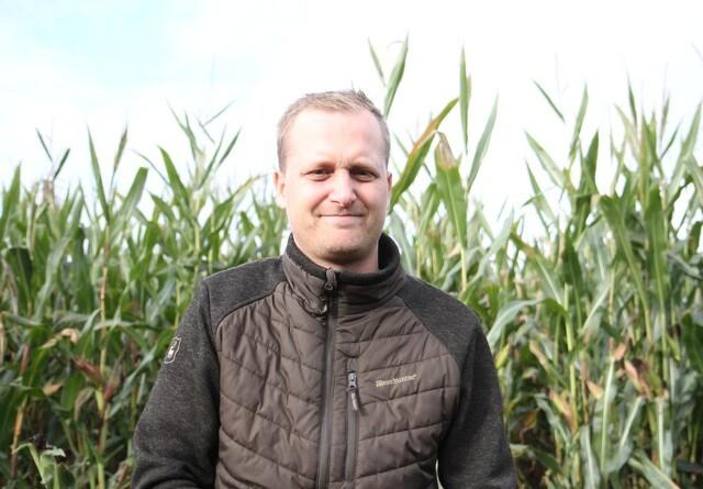 6100 hektar majs skal i hus på tre uger