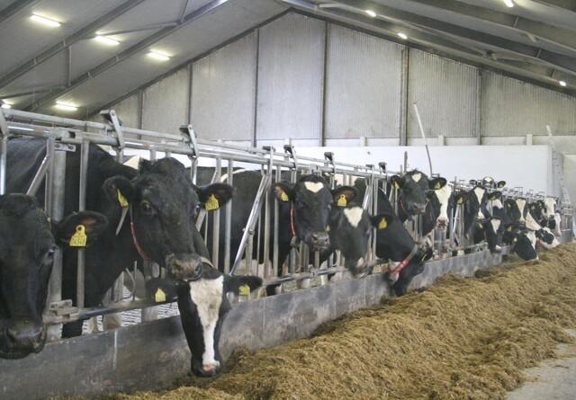 Ansøgningsrunde til kvægstalde forlænget
