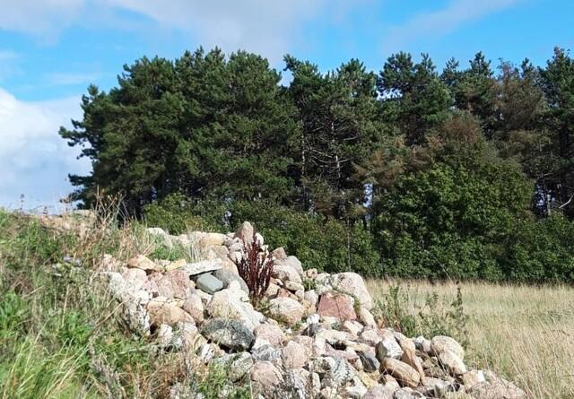 Vejle-Fredericia Landboforening investerer i natur og biodiversitet