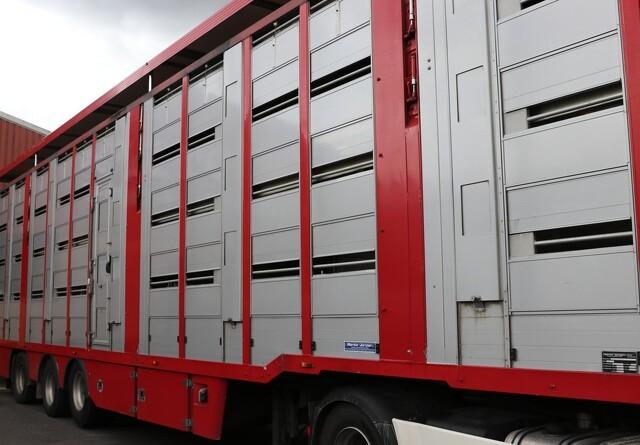 Svinetransport med 575 svin væltet
