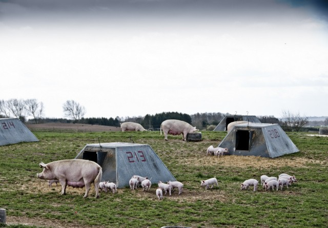 ØL: Ny plan gør det sjovere at være øko-landmand