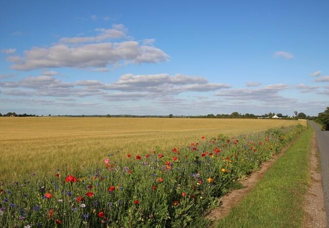 Kommune sponsorerer blomsterstriber