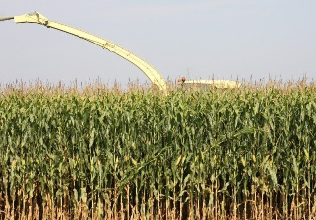 Jyske Markets: Amerikansk majs- og sojatilsåning skuffer nok en gang