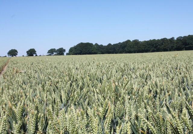 Svensk forsker: Økologi belaster klimaet
