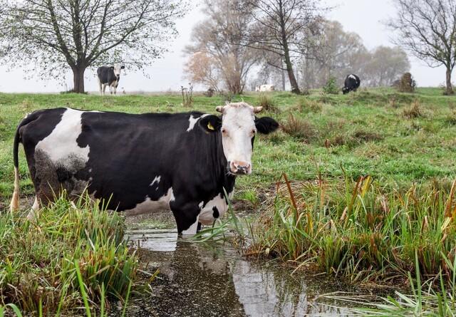 Dansk landbrugsskole sadler om
