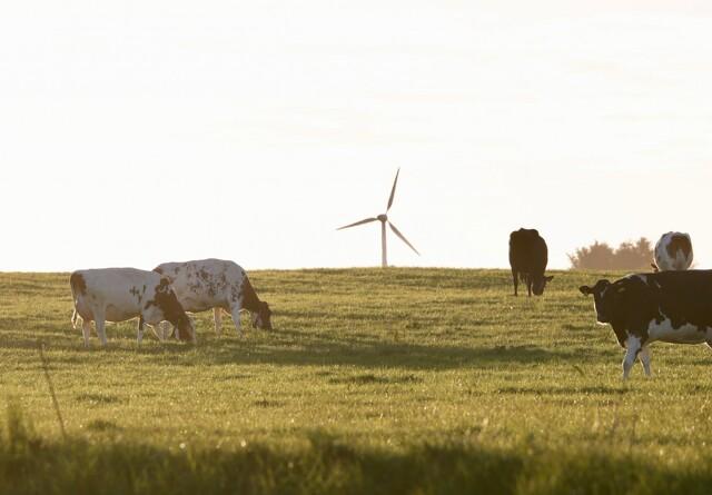 ØL: Ny regering vil fordoble økologien i Danmark