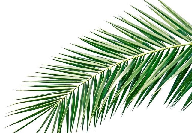 Jyske Markets: Dystre udsigter for palmeolien kan være vendingssignal
