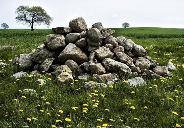 Ploven er skyld i sten på markerne