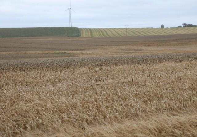 EU's landbrug er ikke bæredygtigt i fremtiden