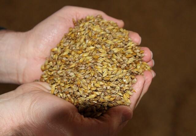 Optimal fodring kræver flere kornprøver efter lang høst