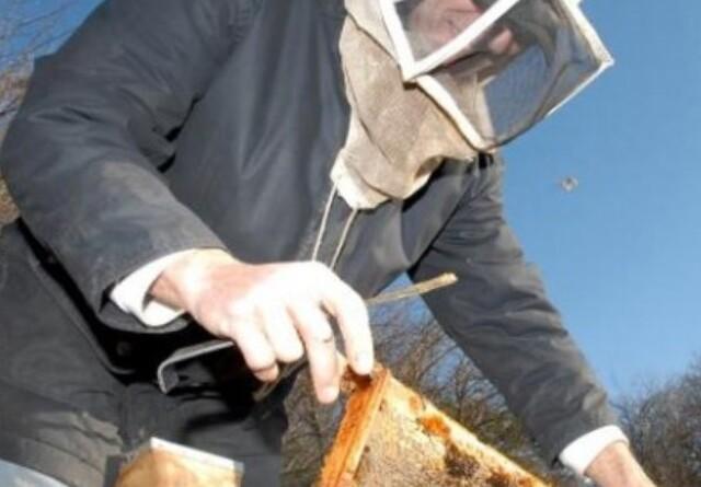 Minister vil hjælpe biavlere