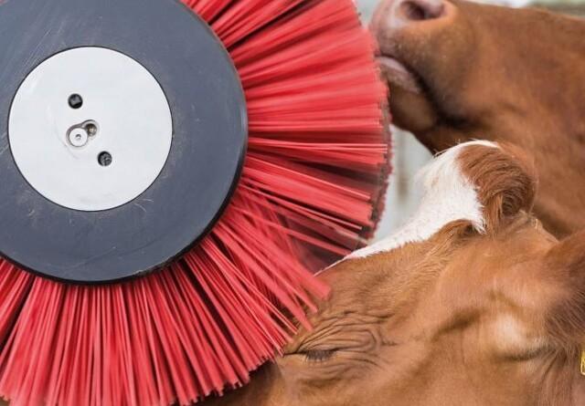 Ny bog om dyrevelfærd og etik