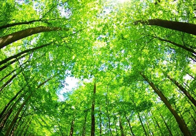1500 hektar mere skov