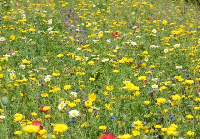 DN ønsker lov for biodiversitet