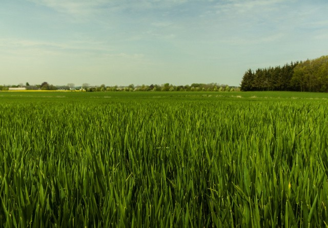 Landmænd mangler grøn viden