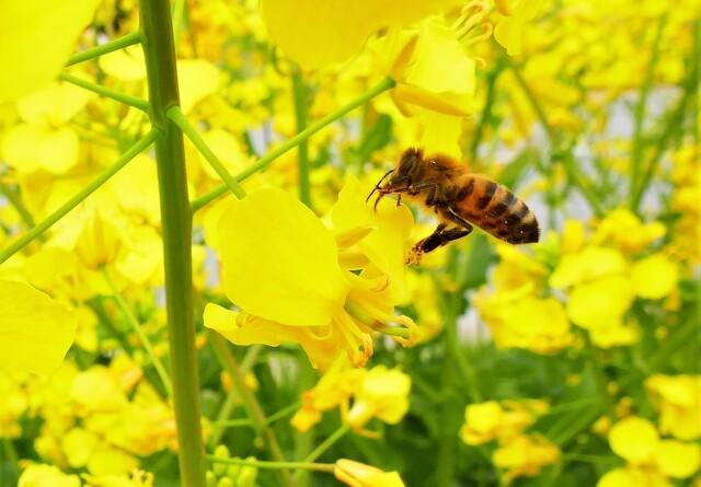 Oplev bierne danse rumba