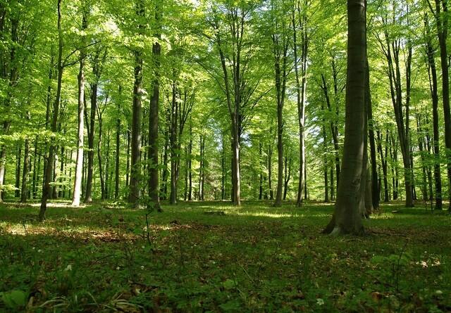 Privat skov kan bidrage til klimaløsninger