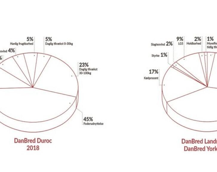 DanBred overgår sig selv og leverer rekordstor avlsfremgang