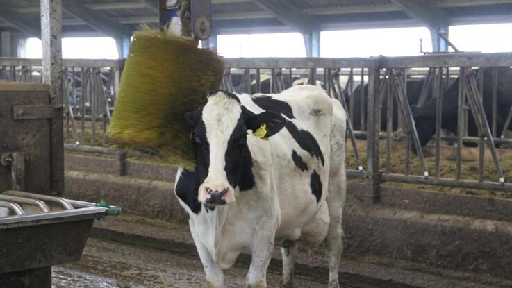 Kommende krav til dyrevelfærd