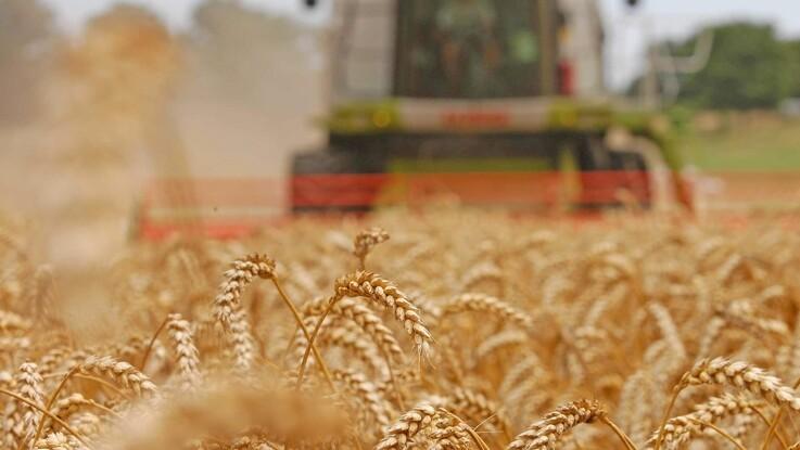 Nyt korn kræver ny foderplan