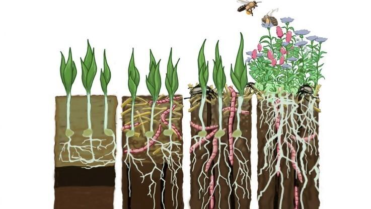 Alt det væsentlige om pløjefri dyrkning
