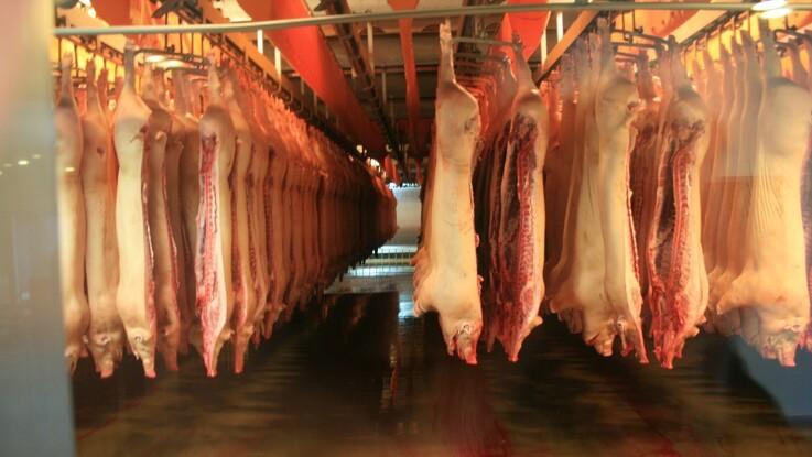 Handelsbarrierer rammer oksekød og mejeriprodukter