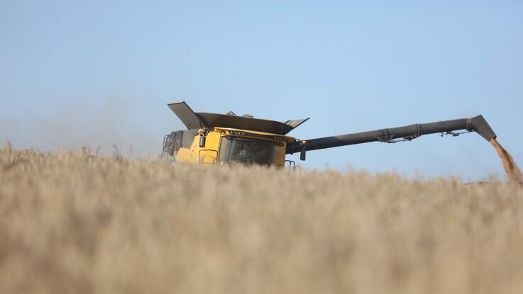 Jyske Markets: Kurs mod en skuffende hvedehøst
