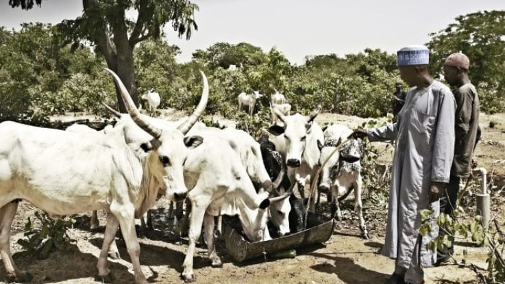 Partnerskab skal styrke mejerisektor i Nigeria
