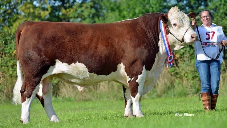 Dansk tyr kom til tops