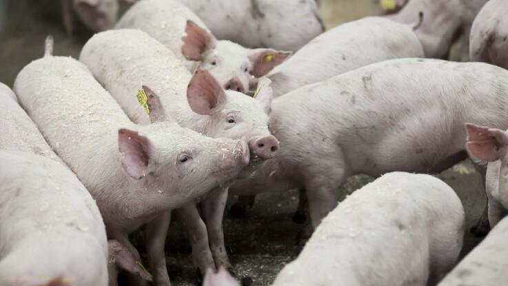 Sociale grise hjælper hinanden med at vokse hurtigere