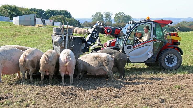 Fynske grise flokkes om fransk teleskoplæsser