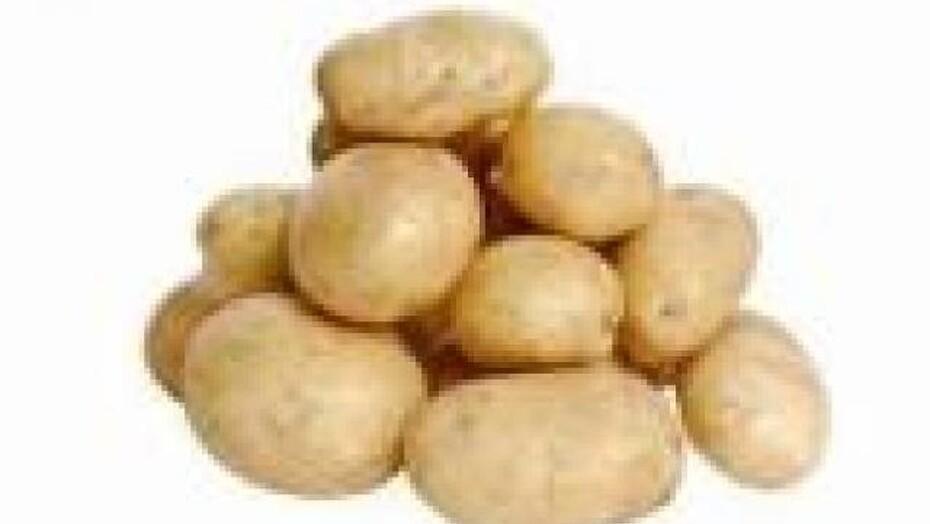 Verdens Storste Kartoffel Event Maskinbladet